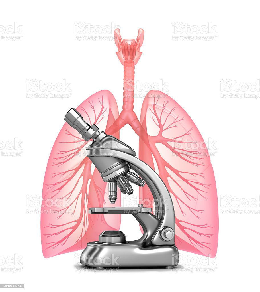 Research of human lungs and bronchi stock photo