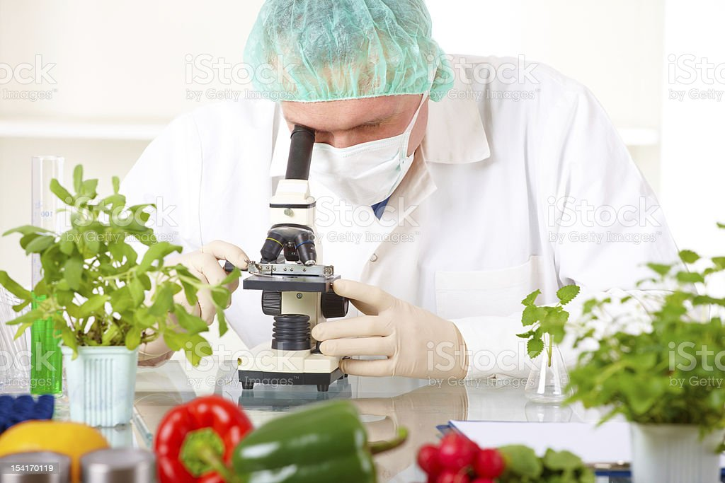 Researcher and microscope with a GMO vegetables in the laborato stock photo