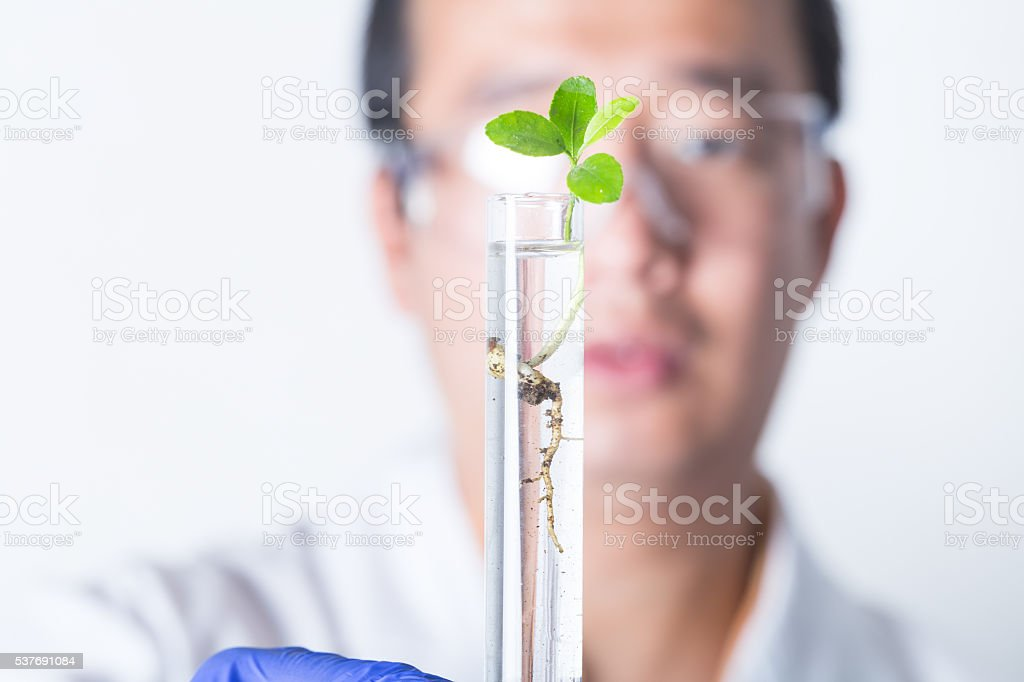 researcher holding tube with young plant stock photo