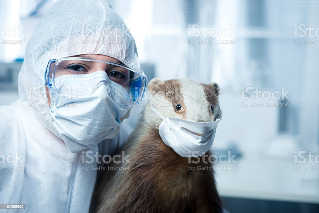 Researcher in protective suit and badger stock photo