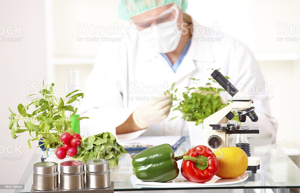 Researcher with GMO plants  in the laboratory stock photo
