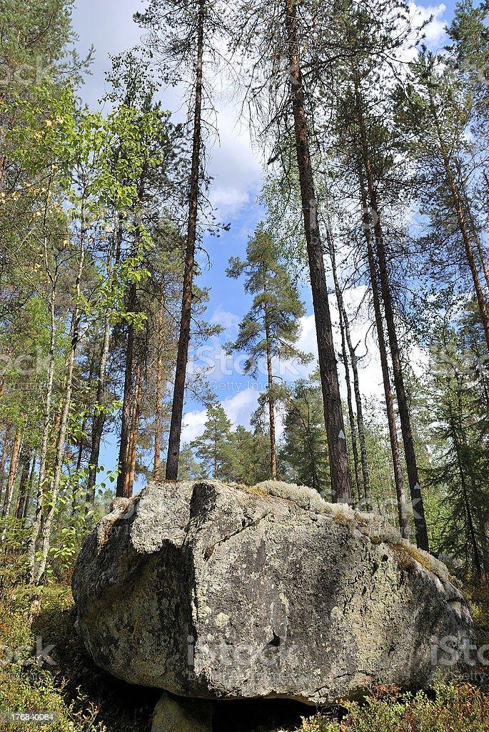 Reserve Kolovesi. Finland royalty-free stock photo