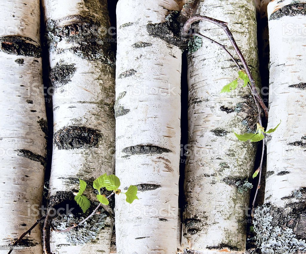 Reserves of birch logs stock photo