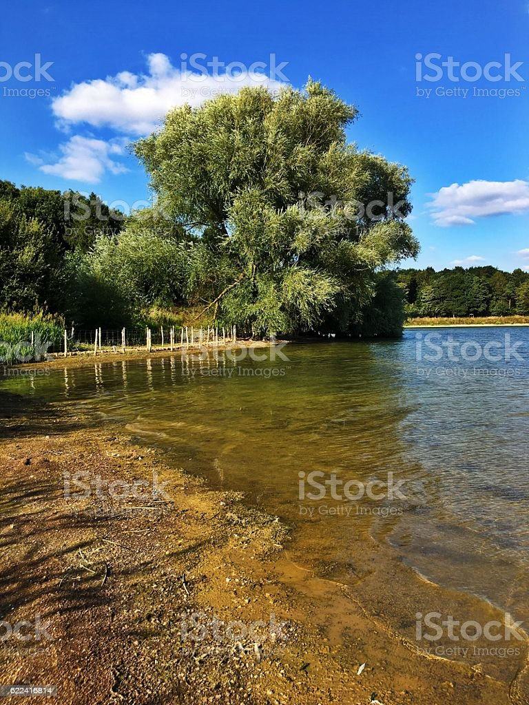 Reservoir Tree stock photo