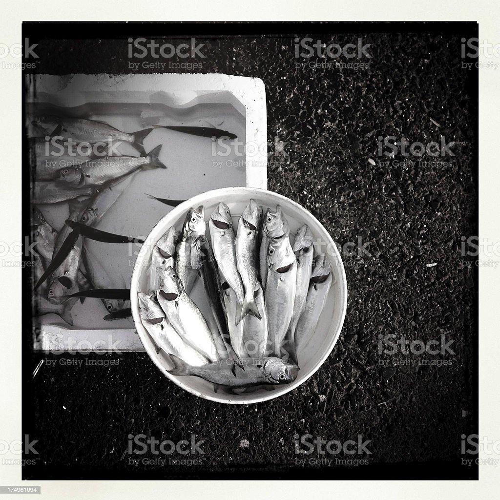 resh fish stock photo