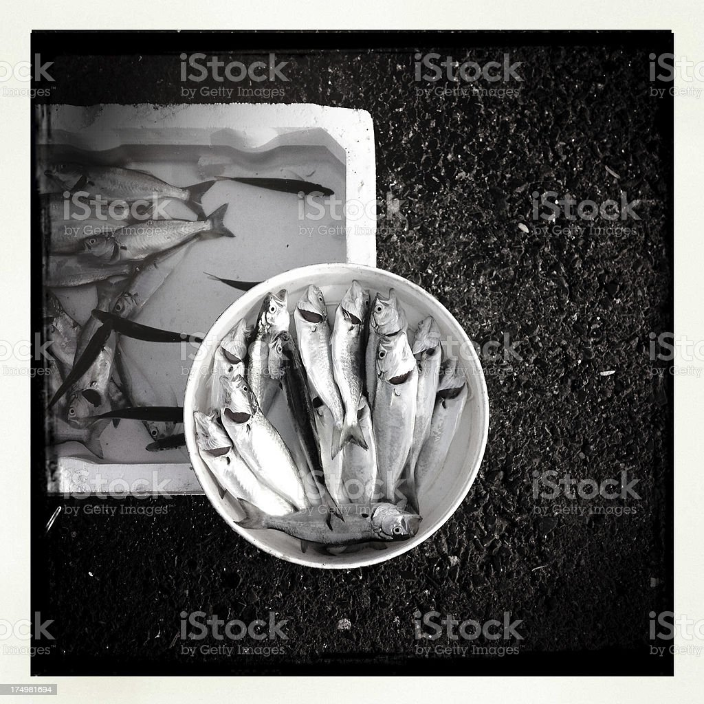 resh fish stock photo