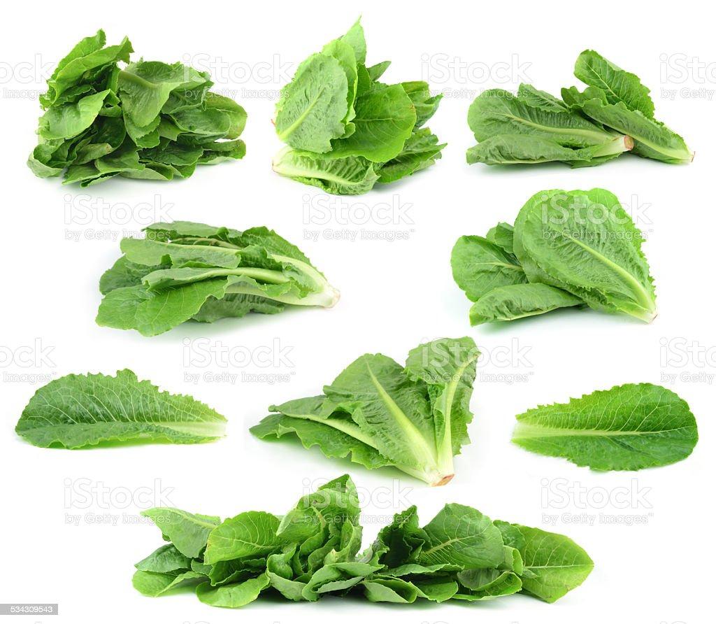 resh green lettuce leaves stock photo