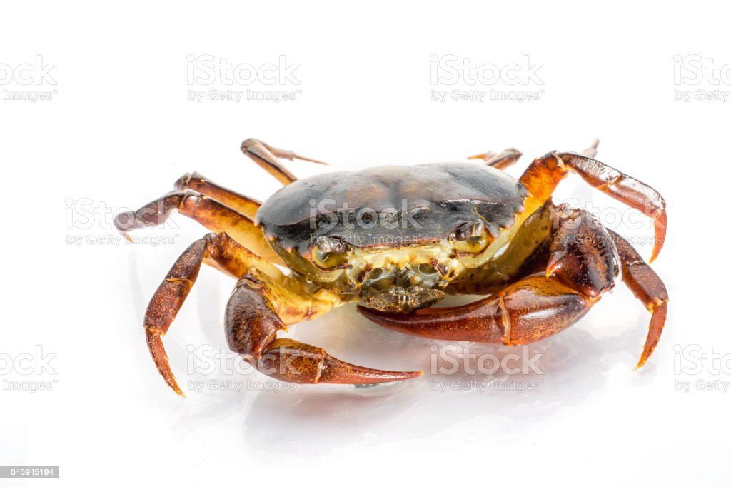 reshwater crabs on White background. stock photo