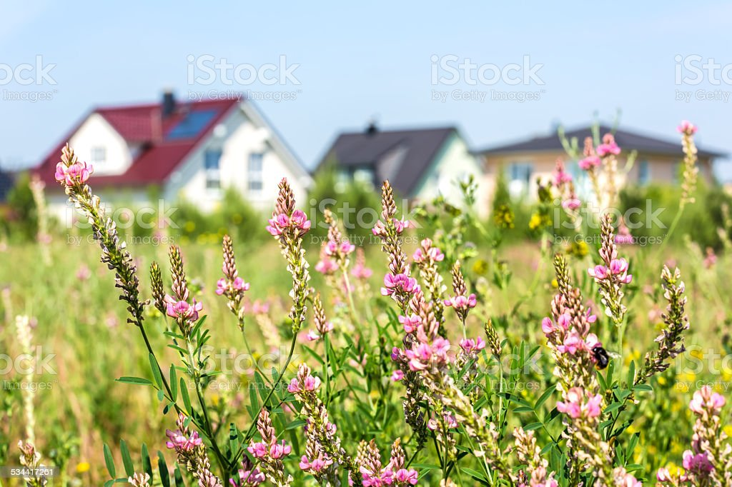 Residential Homes with garden stock photo