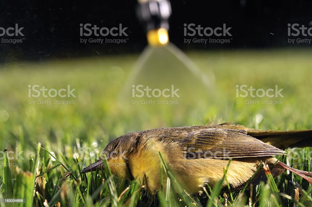Residential Pesticide Use Claims Another Victim royalty-free stock photo