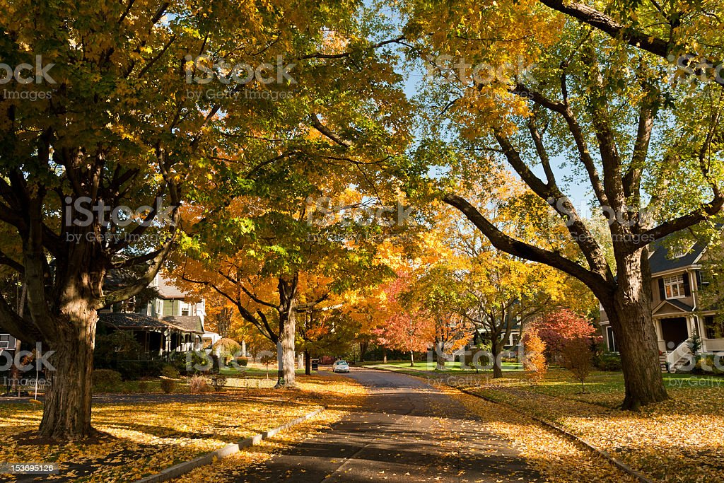 Residential road in Newton, MA in fall stock photo