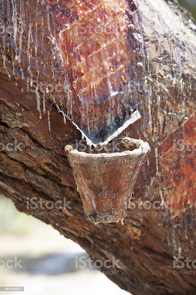 Resine stock photo