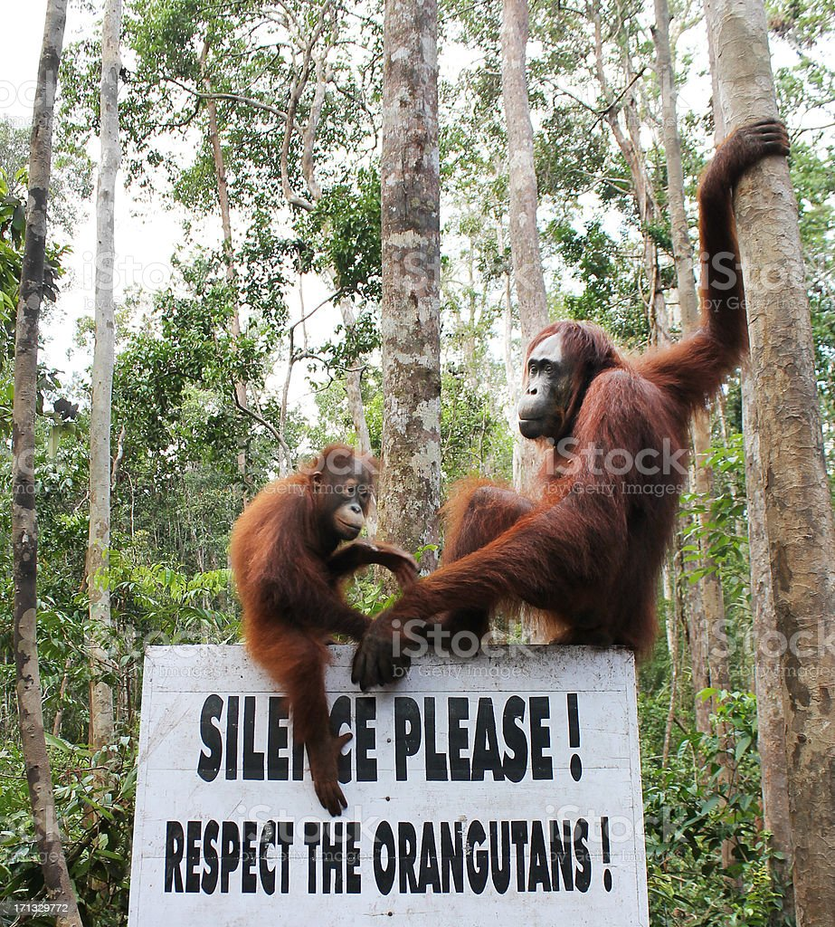 Respect the Orangutans royalty-free stock photo