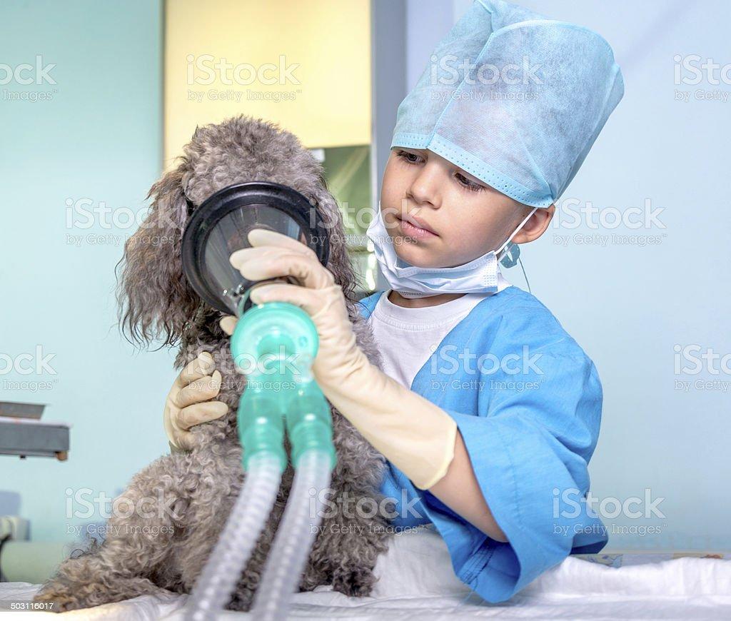 Respiratory machine for pet stock photo