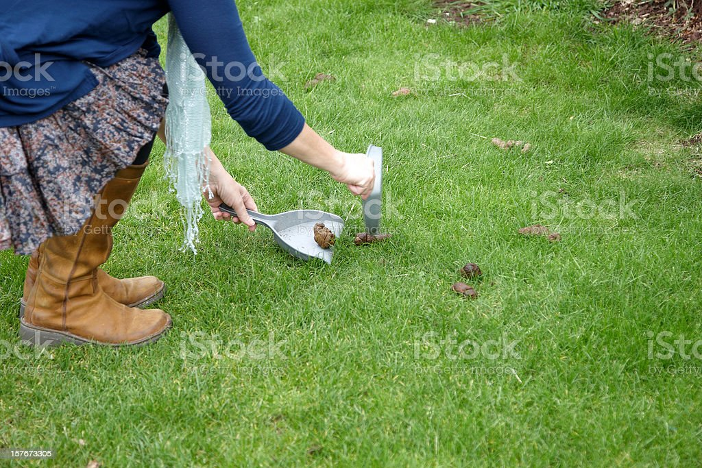 Responsible dog owner cleaning up stock photo