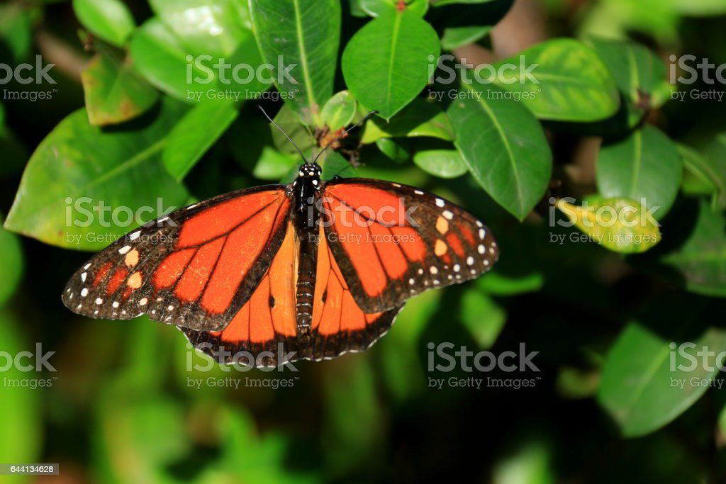Resting butterfly on a leaf stock photo