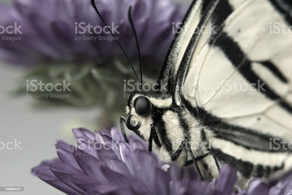Resting butterfly royalty-free stock photo