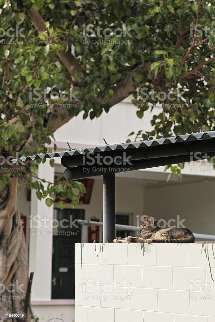 Gato en reposo de liberación prolongada foto de stock libre de derechos