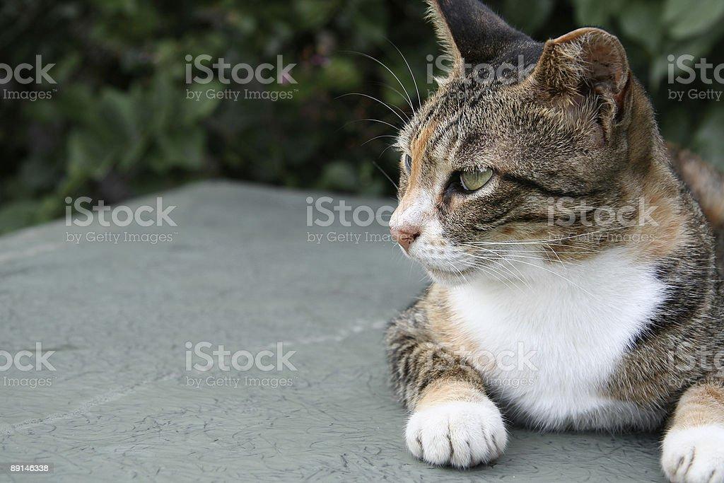 Gato en reposo foto de stock libre de derechos