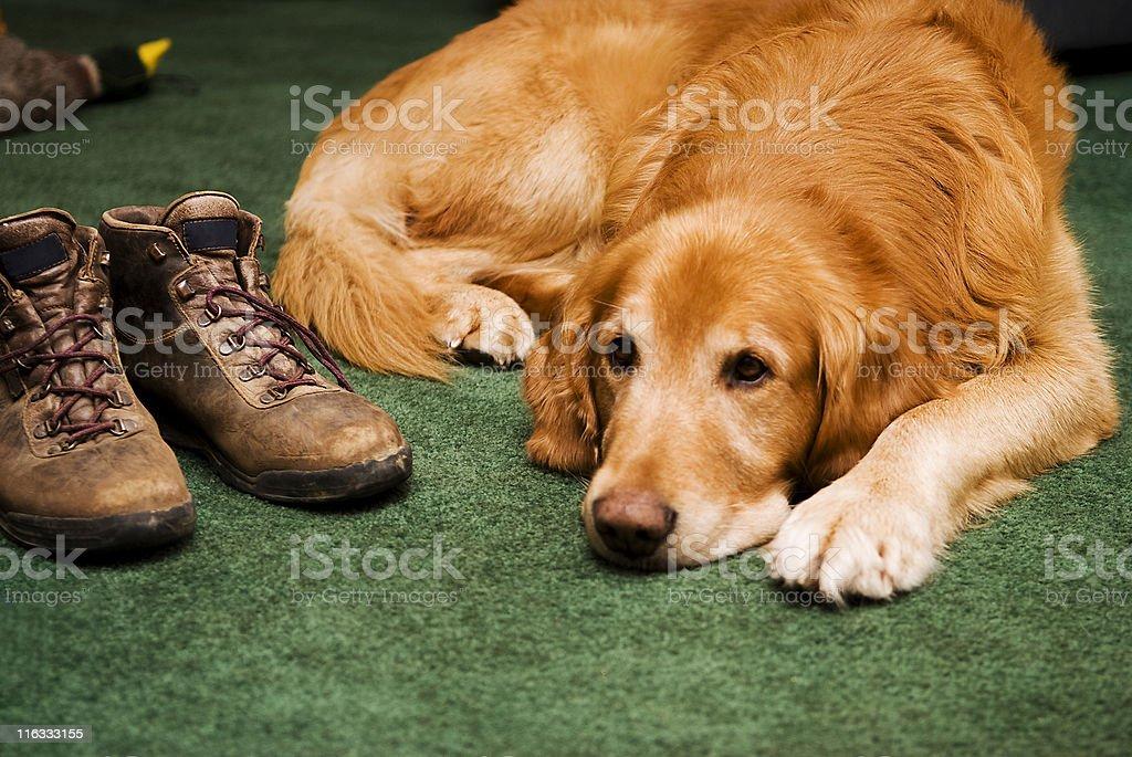 Ruhen Hund Lizenzfreies stock-foto