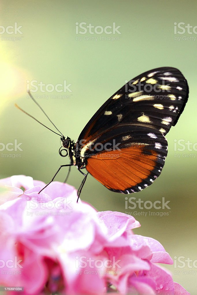Resting on a Flower royalty-free stock photo