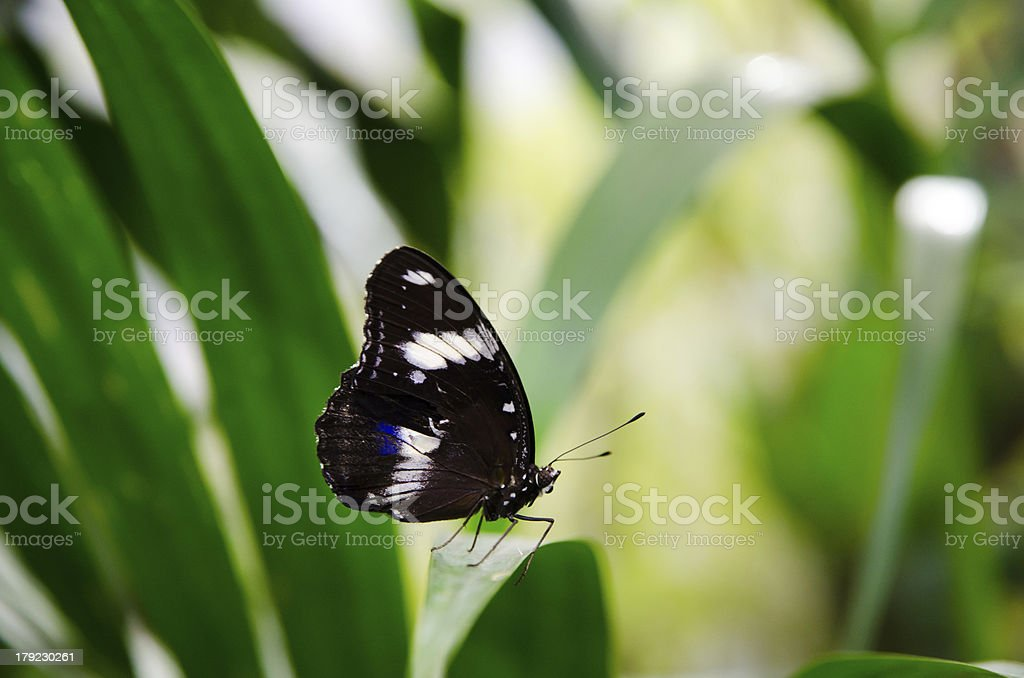 Resting on a Leaf royalty-free stock photo