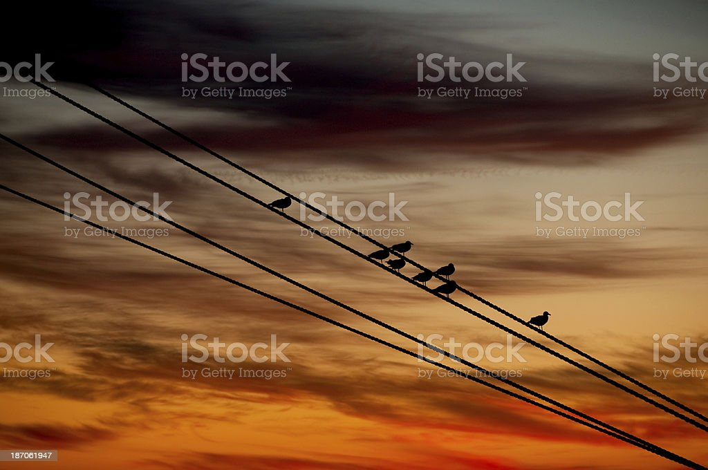 Resting Seagulls royalty-free stock photo