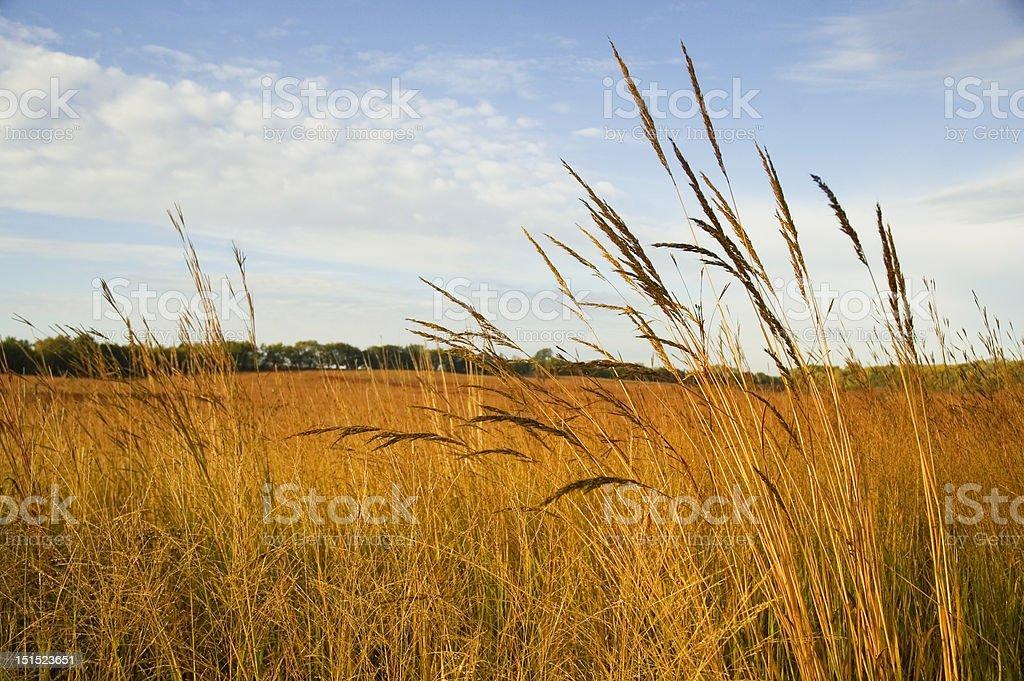 Restored Tall Grass Prairie royalty-free stock photo