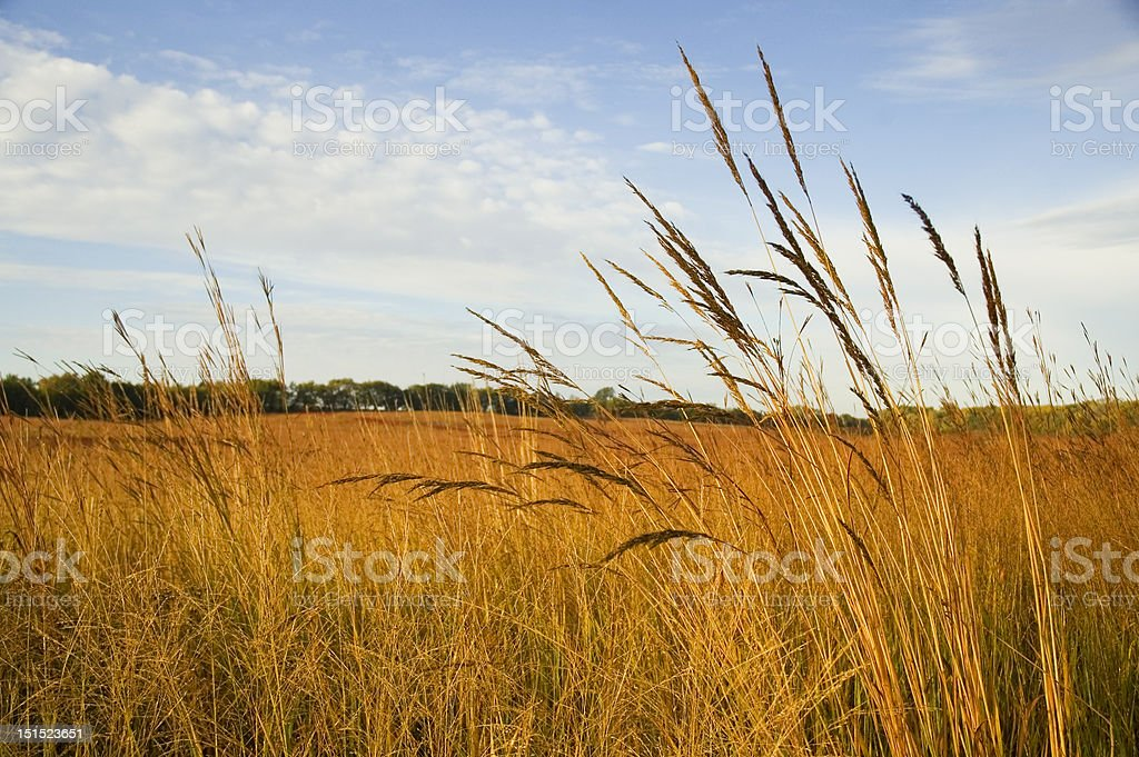 Restored Tall Grass Prairie stock photo
