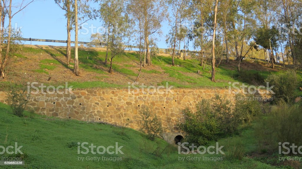 Retaining wall below eucalyptus trees stock photo