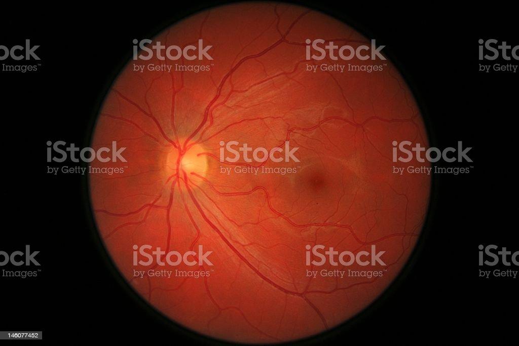 Retina eye scan stock photo