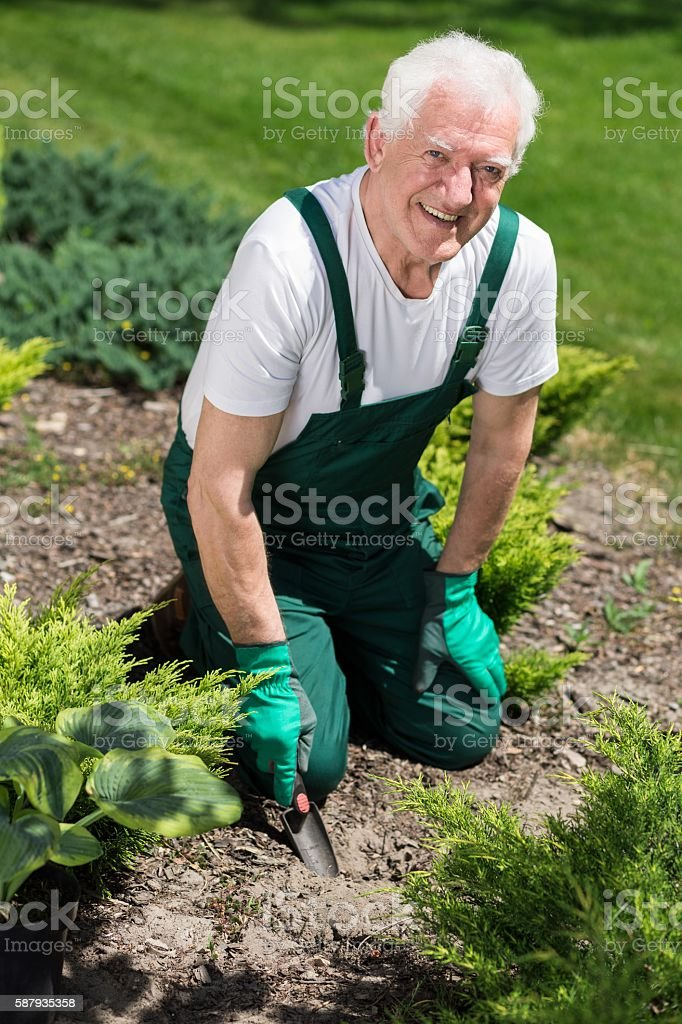 Retired man cultivating the garden stock photo
