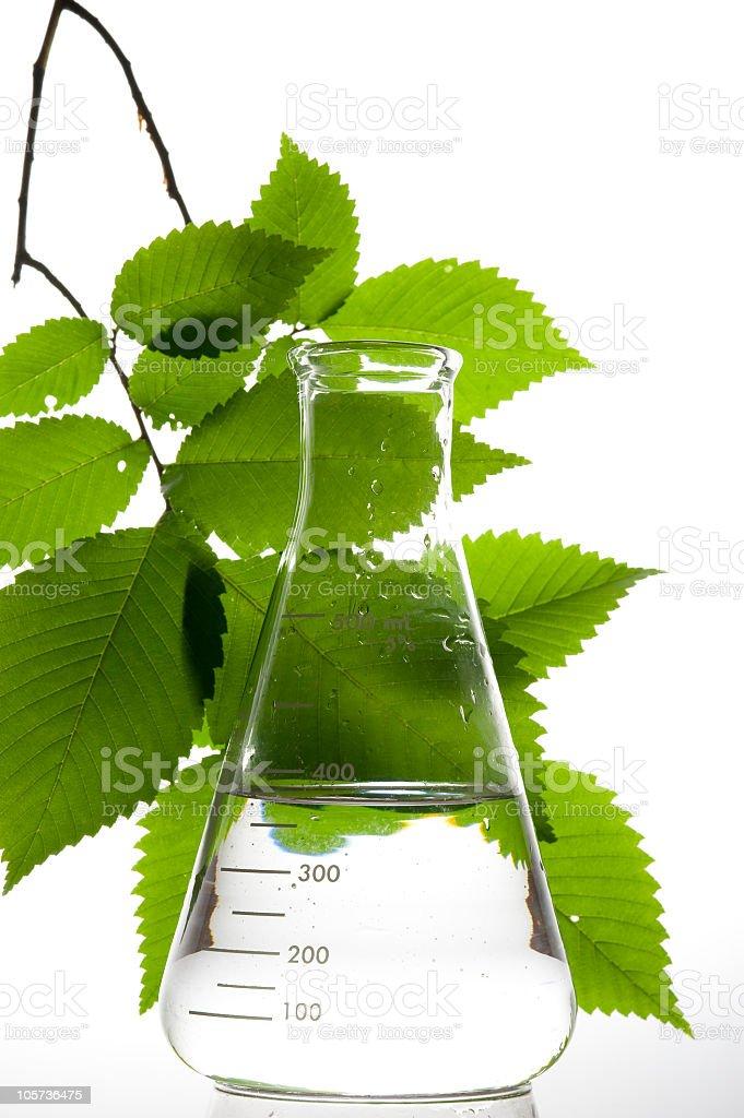 Retort and leaf stock photo