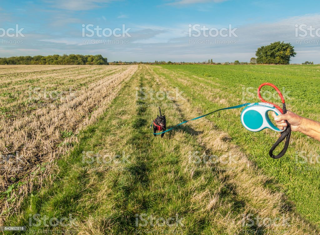 Retractable, extendable leash and dog. stock photo