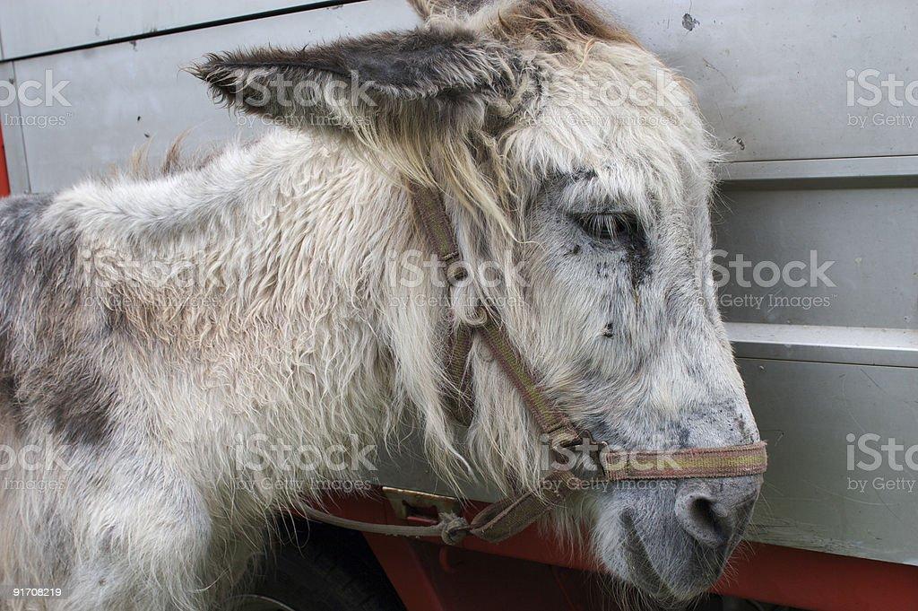 Retrato de un burro una feria stock photo