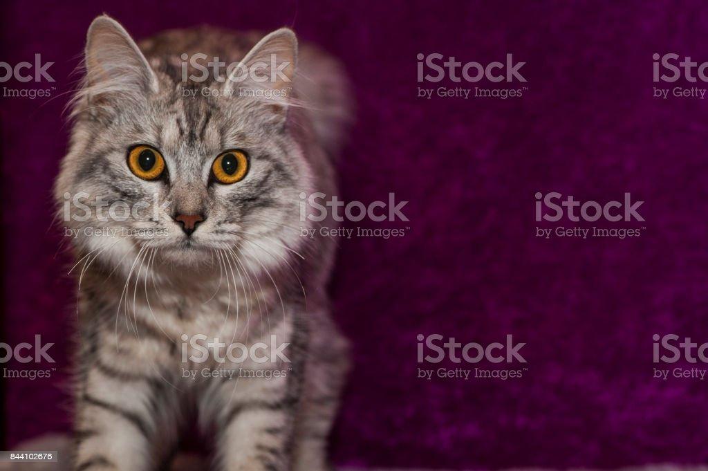 Retrato felino stock photo