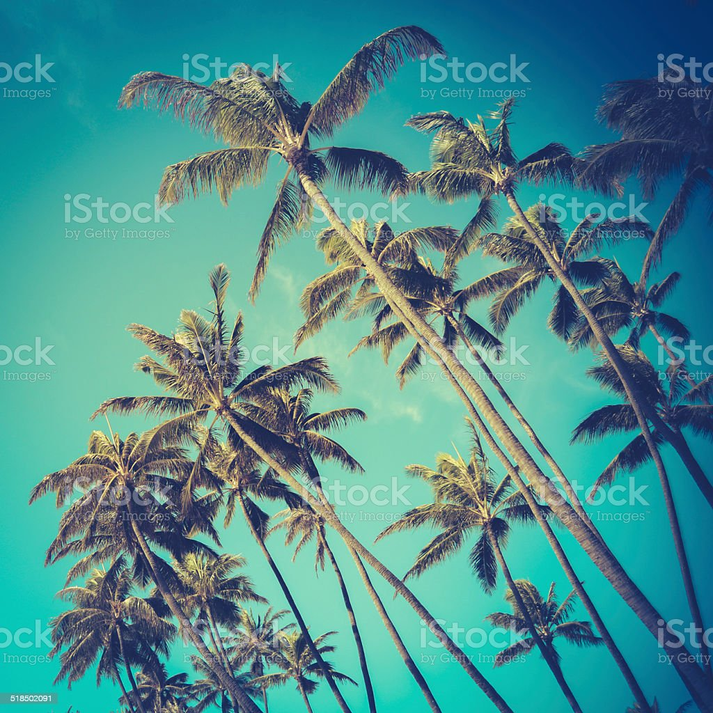 Retro Diagonal Palm Trees In Hawaii stock photo