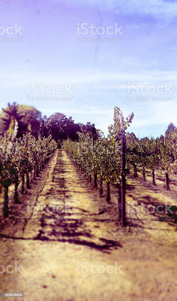 Retro Filmstock Vineyard Rows royalty-free stock photo