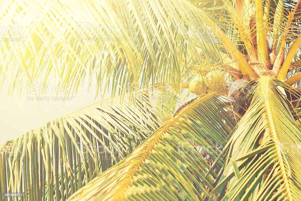 Retro Filtered Coconut Palm Trees, Solar Toned stock photo
