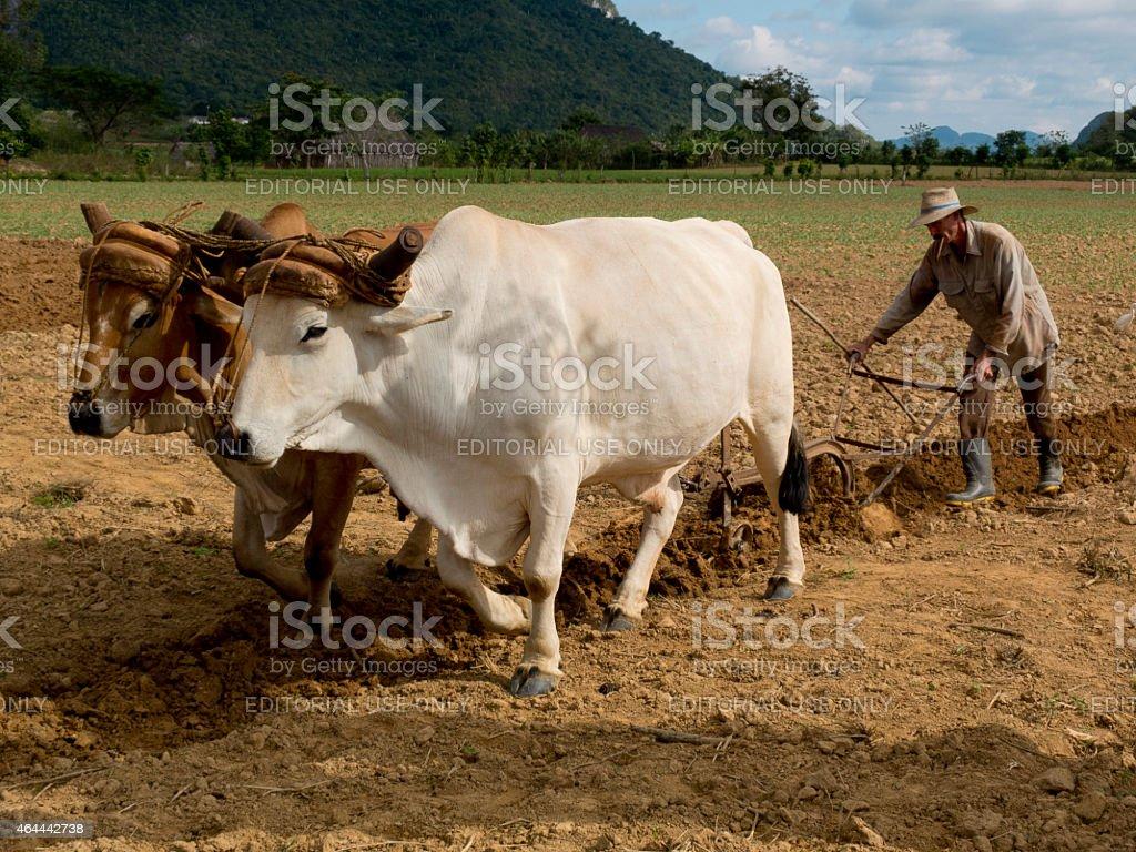 Retro ploughing. stock photo