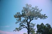 Retro Styled Evergreen Tree