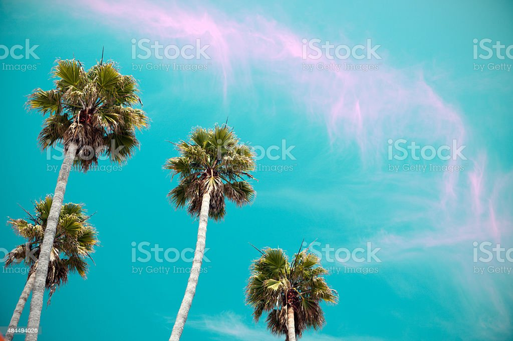 Retro Styled Palm Trees with Copy Space stock photo