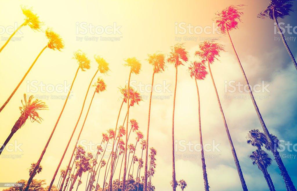 Retro stylized palms at sunset, Santa Monica, USA. stock photo
