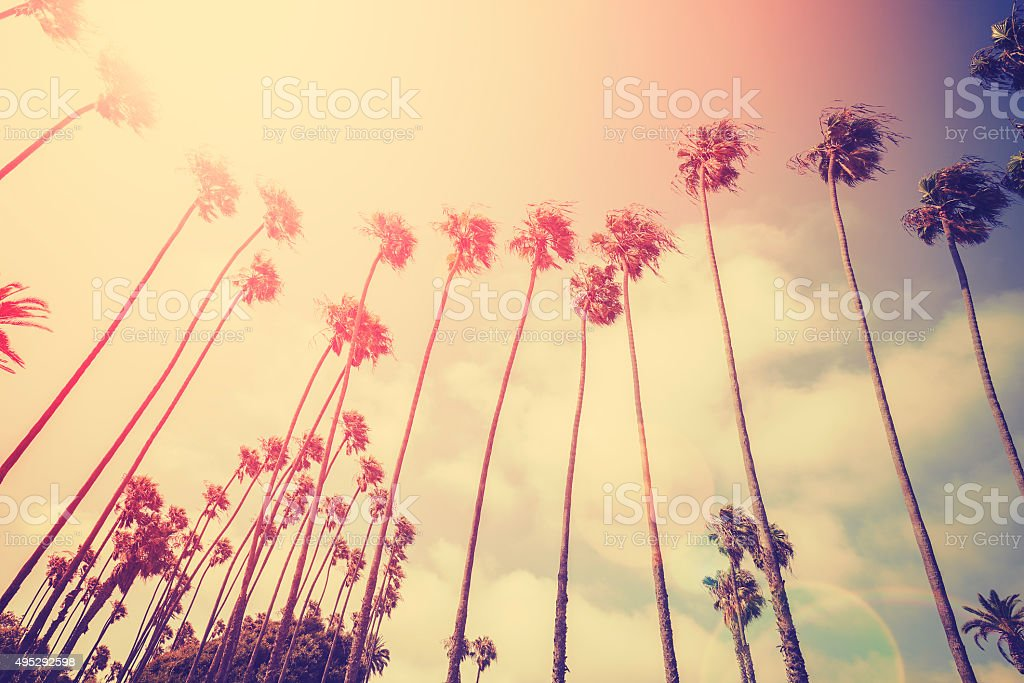 Retro stylized palms silhouettes at sunset with flare effect. stock photo