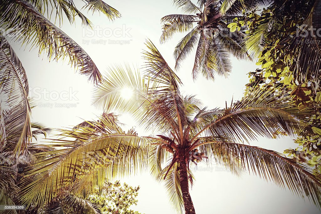 Retro toned and faded palms nature background. stock photo
