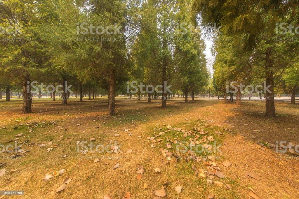 Retro woods meadow Cypress stock photo