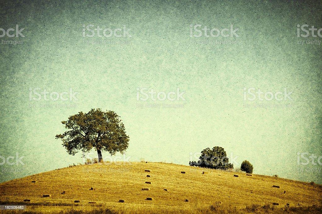 Retro-style photo of tree royalty-free stock photo