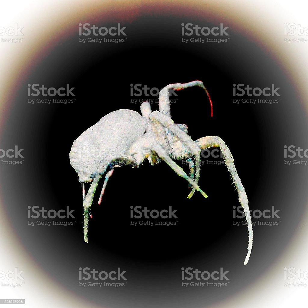 reverse effec spider stock photo