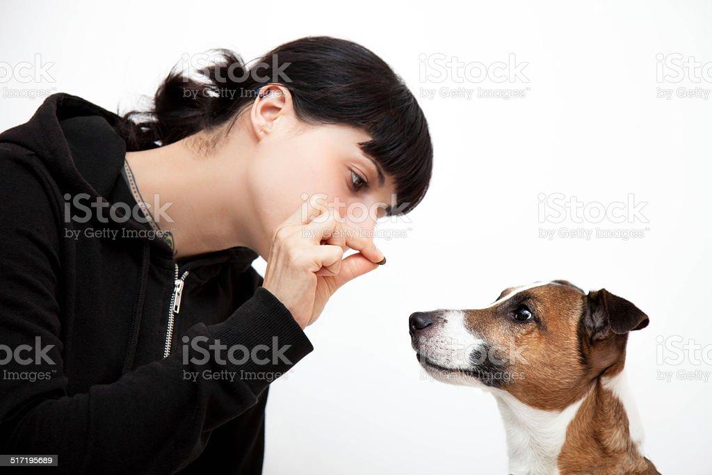 Reward the dog stock photo