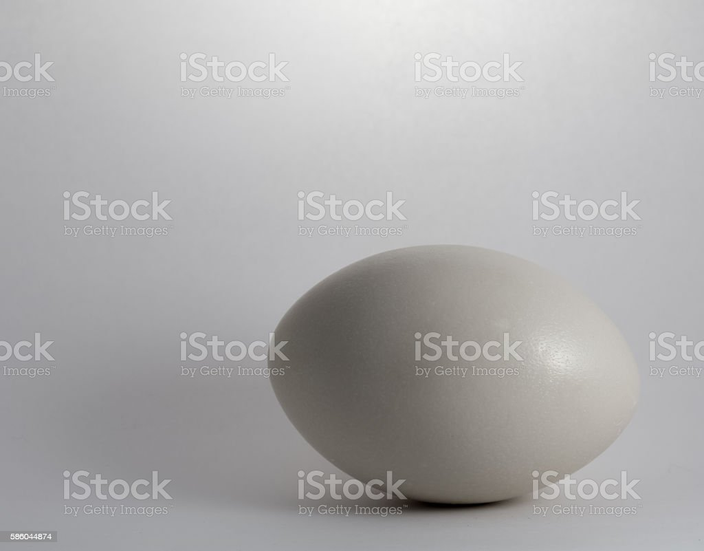 Rhea Egg stock photo